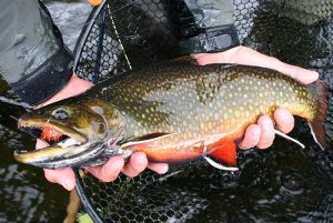 big-brook-trout-esnagami